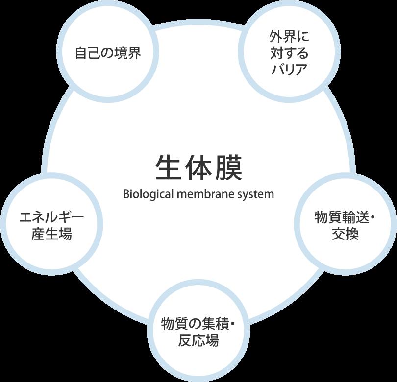 生体膜システム分野とは?